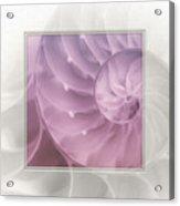 Nautilus Matted Acrylic Print