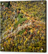 Nc Fall Foliage 0543 Acrylic Print