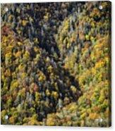 Nc Fall Foliage 0544 Acrylic Print