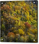 Nc Fall Foliage 0559 Acrylic Print