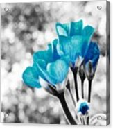 Near Bloom Blue Acrylic Print