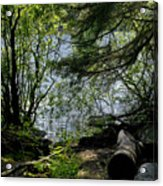 Near Water Of The Forest Lake. Acrylic Print