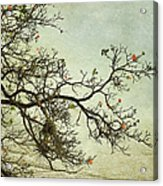 Nearly Bare Branches Acrylic Print