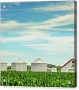 Nebraska Corn Acrylic Print