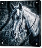 Nebraska Rodeo Roping Horse... Acrylic Print