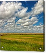 Nebraska Wheat Fields Acrylic Print