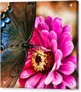 Nectar Feast Acrylic Print