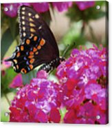 Nectar Of Pink Passion Acrylic Print