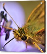 Nectar Smoothie Acrylic Print