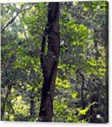 Needle Hook Tree Acrylic Print