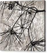 Needles Everywhere Acrylic Print