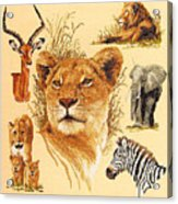 Needlework - African Animals Acrylic Print