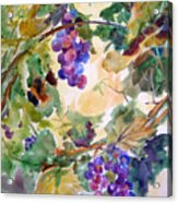 Neighborhood Grapevine Acrylic Print