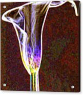 Neon Calla Lilly 3 Acrylic Print