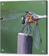 Neon Dragonfly Acrylic Print