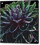 Neon Garden Dahlia I Acrylic Print