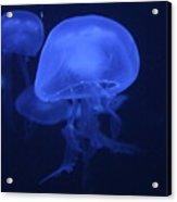 Neon Jelly 1 Acrylic Print