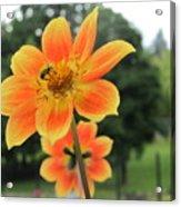 Neon Orange Flower Acrylic Print