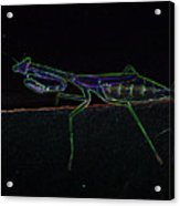 Neon Praying Mantis Acrylic Print
