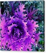 Neon Purple Acrylic Print