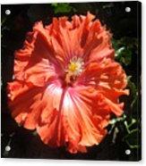 Neon-red Hibiscus 6-17 Acrylic Print