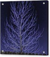 Neon Tree Acrylic Print