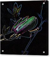 Neon Tulip Tree 5090 Acrylic Print