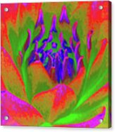 Neon Water Lily 02 - Photopower 3371 Acrylic Print