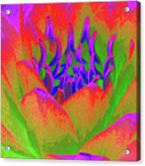 Neon Water Lily - Photopower 3370 Acrylic Print