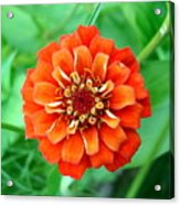 Nepal Orange 2 Acrylic Print