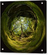Ness Glen Acrylic Print