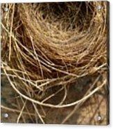Nest 913 Acrylic Print