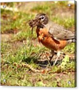Nesting Collection ... Montana Art Photo Acrylic Print