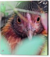Nesting In The Wild Acrylic Print