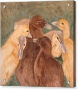 Nestlings.  Ducklings Huddled Together Acrylic Print
