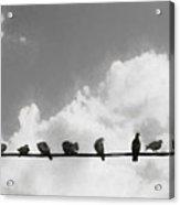 Network Of The Bird Line  Acrylic Print