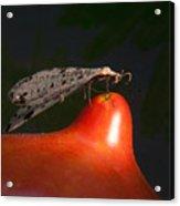 Neuroptera Posing Acrylic Print