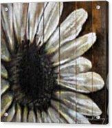 Neutral Sunflower Acrylic Print