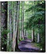 Never Ending Trail Acrylic Print