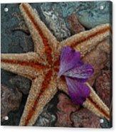 Never Forgotten- Starfish Art Acrylic Print