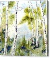 New England Birches Acrylic Print