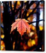 New England Fall - Lone Acrylic Print