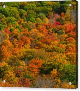 New England Fall Foliage Peak  Acrylic Print