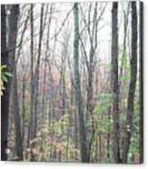 New England Forest Acrylic Print