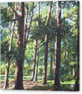 New Forest Trees With Shadows Acrylic Print