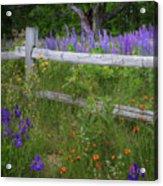 New Hampshire Wildflowers Acrylic Print