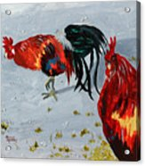 New Harmony Roosters Acrylic Print