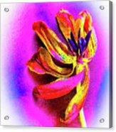 New Life Acrylic Print