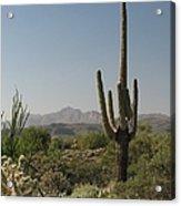 New Mexican Desert Acrylic Print