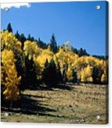 New Mexico Aspen Acrylic Print